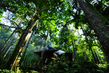 "UN Forum on Forests Photo Competition Winner: ""Pahmung Krui Damar Forest"" 14.547665"