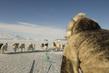 Dog Sledding in Uummannaq, Greenland 2.6095297