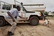 UNMAS Demonstration of Sniffer Dogs at Work in South Sudan 4.589406
