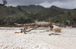 Flooding Ravages Southeastern Haiti 1.4260751