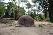 Rusting Helmet in DRC 4.451853