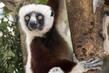 Lemurs' Park Near Antananarivo, Madagascar 7.975916