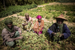 MINUSMA Funds a Farming Cooperative in Mali 4.6302633