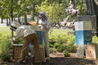 Beehives Installed on UNHQ Grounds 3.225183