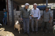 Goat Vaccination Drive Conducted by UNIFIL Peacekeepers 4.797184
