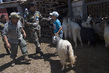 Goat Vaccination Drive Conducted by UNIFIL Peacekeepers 4.796974