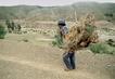 Collecting Firewood near Tarabuco, Bolivia 2.568593
