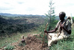 Reafforestation in Ethiopia 12.694725