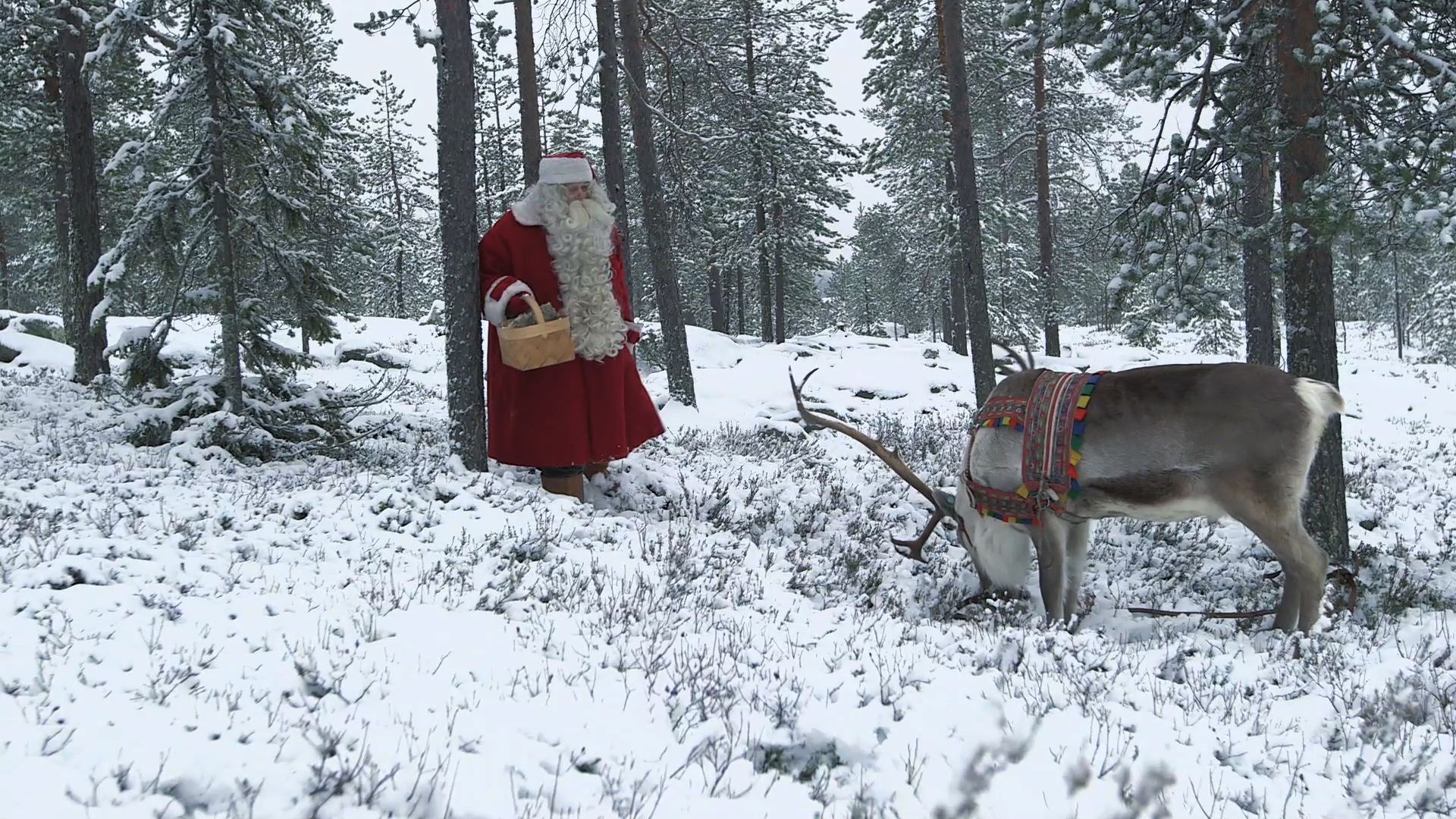 Selected frame from video story FAO / SANTA EUROPEAN FORESTRY WEEK