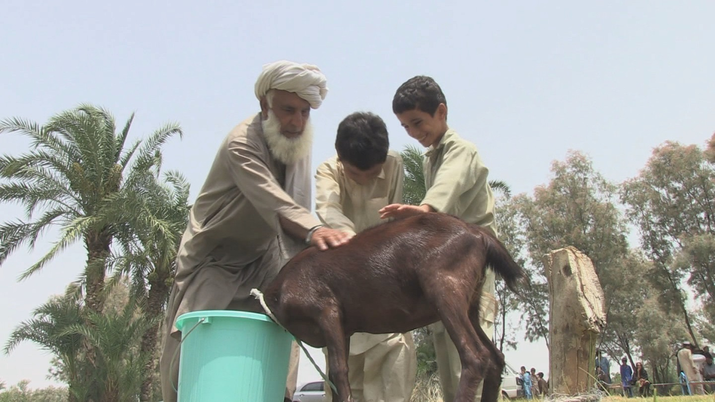 PAKISTAN  DISPLACED LIVESTOCK