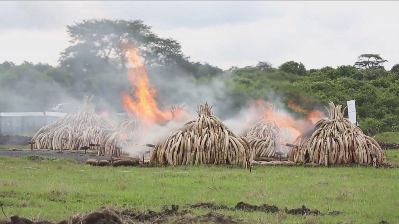 KENYA / IVORY BURNING