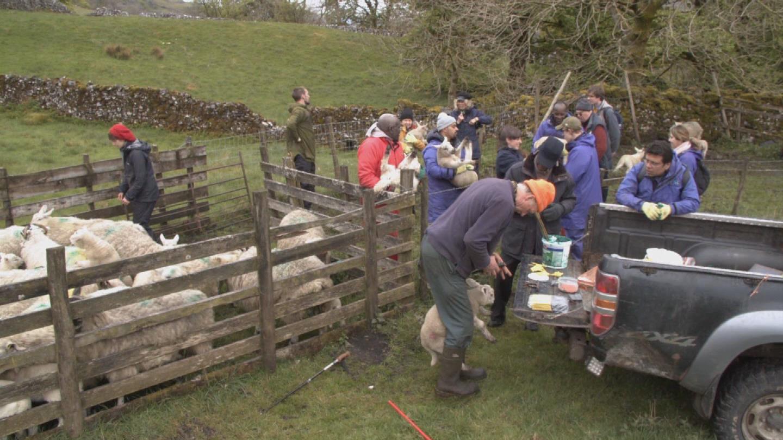 UK  REFUGEES LAMB FARM