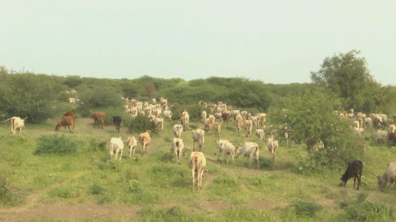 SOUTH SUDAN  CROSS-BORDER PASTORALISTS CONFERENCE